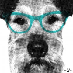 Smart_Dog_CloseUp