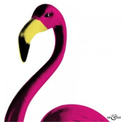 Flamingo_CloseUp